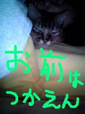 Neko061218_065203_04