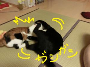 Neko2012012591