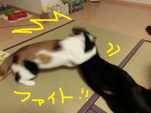 Neko2012012593