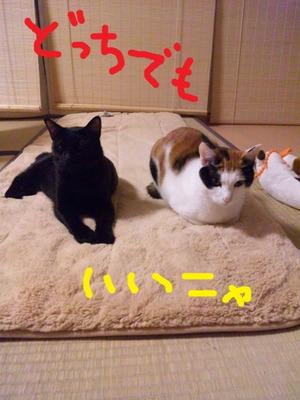 Neko20111108