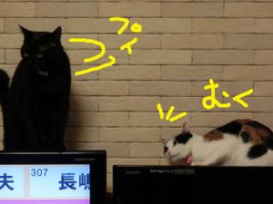 Neko2012032691