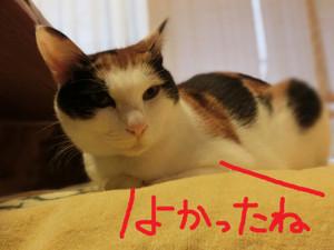 Neko201211212